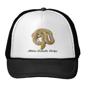 Albino Genetic Stripe Mesh Hat