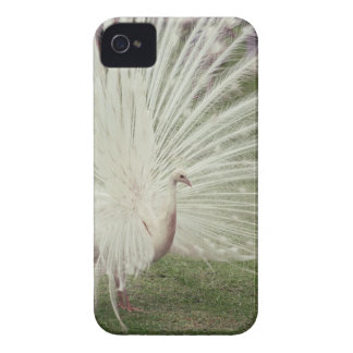 Albino peacock Case-Mate iPhone 4 cases