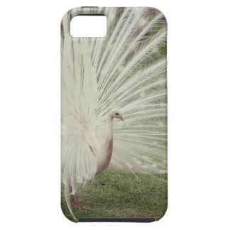 Albino peacock iPhone 5 covers