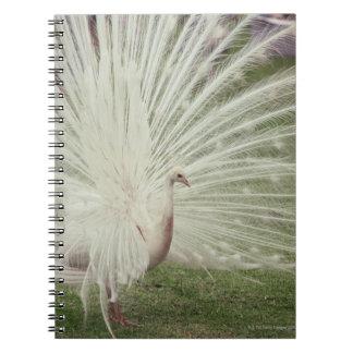 Albino peacock notebook