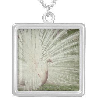 Albino peacock silver plated necklace