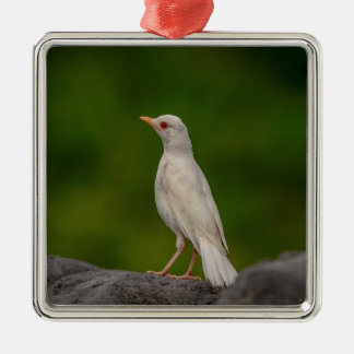 Albino Robin in Crown Point Christmas Ornament