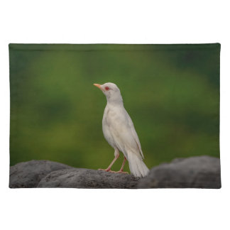 Albino Robin in Crown Point Placemats