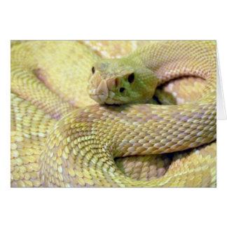 Albino Snake Greeting Card