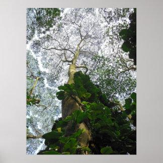 Albizia Tree Print