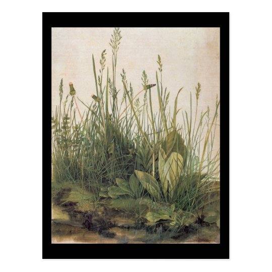 Albrecht Durer Great Piece of Turf Postcard