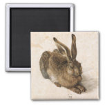 Albrecht Dürer - Junger Hase (Young Hare), 1502 Square Magnet
