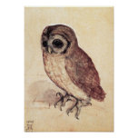 Albrecht Durer The Little Owl Poster