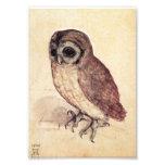 Albrecht Durer The Little Owl Print Photo Print