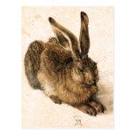 Albrecht Durer Young Hare Postcard