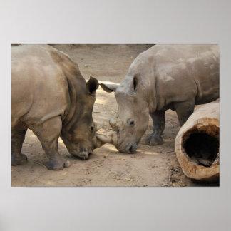 Albuquerque Zoo Rhinoceros Poster