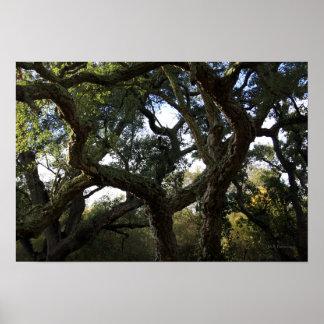 Alcornoque o árbol del corcho árbol elegante posters