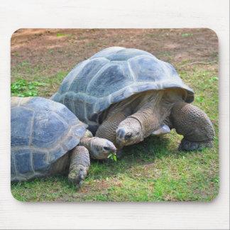 Aldabra Tortoises Mousepad