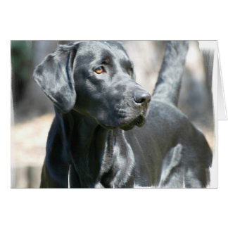 Alert Black Lab Greeting Card
