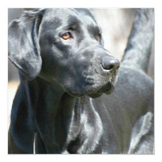 Alert Black Labrador Rertriever Dog Invitations