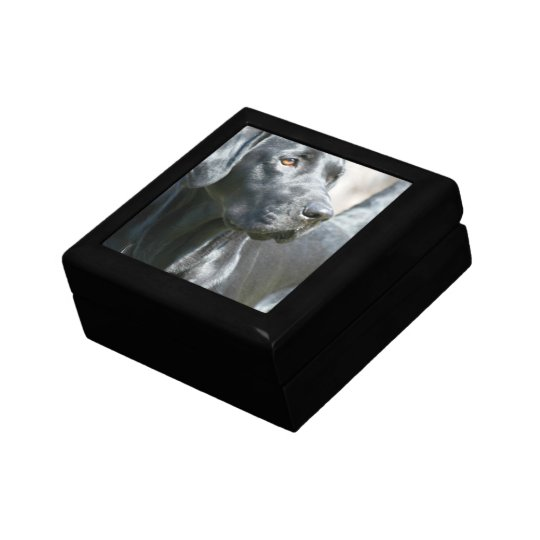 Alert Black Labrador Retriever Dog Gift Box