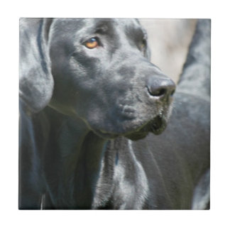 Alert Black Labrador Retriever Dog Tile