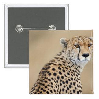 Alert Cheetah Acinonyx jubatus), Masai Mara 15 Cm Square Badge