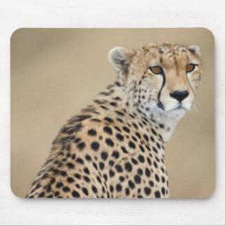 Alert Cheetah Acinonyx jubatus Masai Mara Mousepads