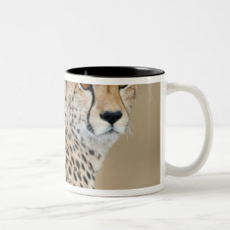 Alert Cheetah Acinonyx jubatus), Masai Mara Two-Tone Coffee Mug