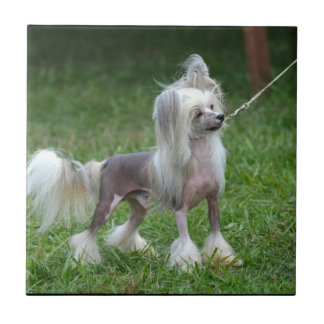 Alert Chinese Crested Dog Tile