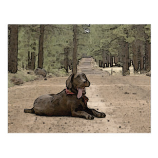 Alert Chocolate Lab On A Forest Trail Postcard