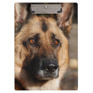 Alert German Shepherd Clipboard