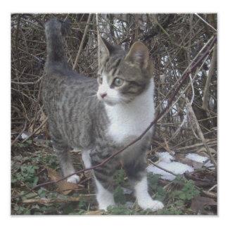 Alert Kitten Photo Art