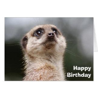 Alert Meerkat Greeting Card