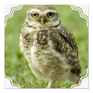 Alert Owl Invitations