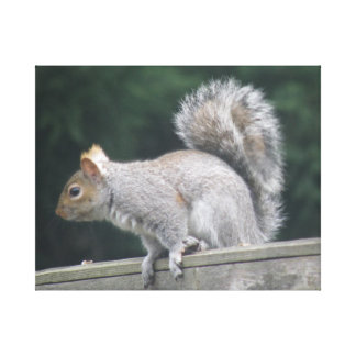 Alert Squirrel Canvas Print