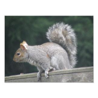 Alert Squirrel Photo Print