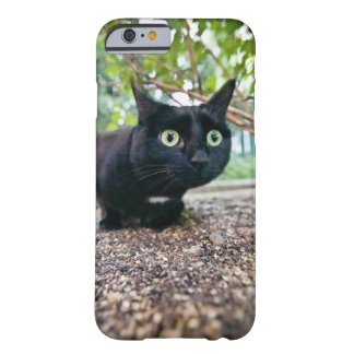 alerted cat hiding under bush. barely there iPhone 6 case