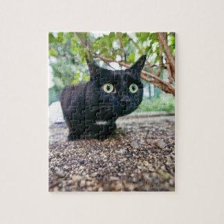 alerted cat hiding under bush. jigsaw puzzle