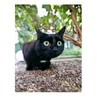 alerted cat hiding under bush. postcard