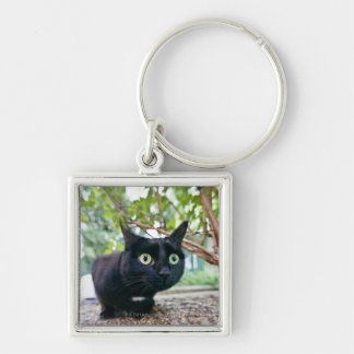 alerted cat hiding under bush. Silver-Colored square key ring