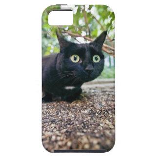 alerted cat hiding under bush. tough iPhone 5 case