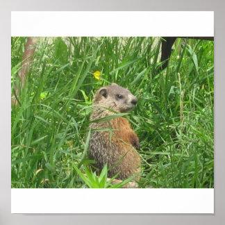 Alerted Groundhog Poster