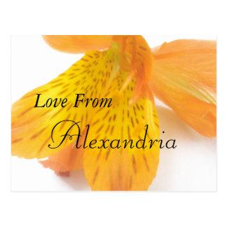 Alexandria Postcard