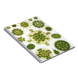 Algae notebook