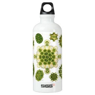 algae water bottle