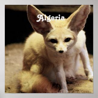Algeria Fennec Fox Posters