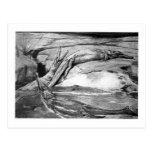 Alice B. Woodward: Metriorhynchus art postcard