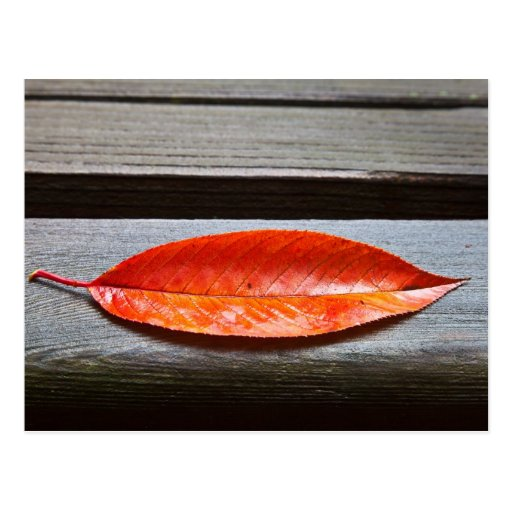 All Alone (Red Fall Leaf) Post Cards