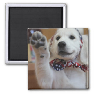 All American Puppy, the cutest Patriot Square Magnet