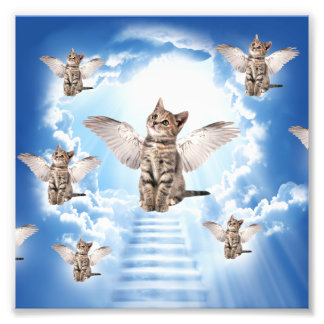 All Cats Go to Heaven Photo Print
