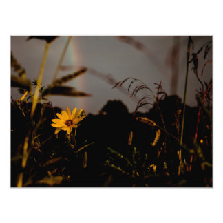 ALL FLOWERS IN TIME PHOTO PRINT