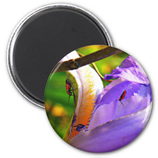 All In The Details - Iris and insects 6 Cm Round Magnet