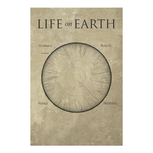 All Life on Earth, mapped out on one