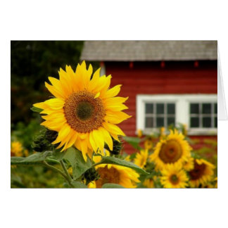 all occasion/sunflower card